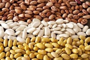 different pinto beans photo