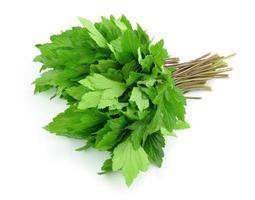 Celery isolated on white background photo