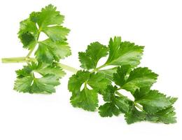 celery leaves isolated on the white background