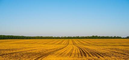 landsbygden