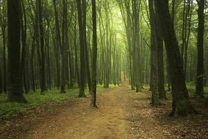 Elegant forest landscape