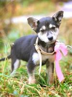 filhote de cachorro com laço rosa no quintal