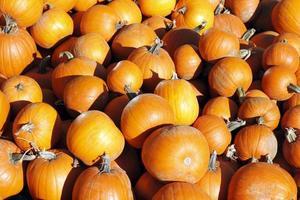 Fall Fruit photo