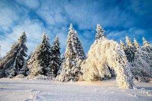 magical winter photo