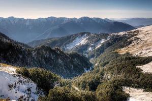bosques de invierno