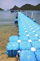 plastic pier  coastline of a  green lagoon wild angle