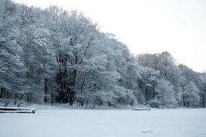 legno d'inverno