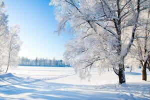 parc d'hiver dans la neige