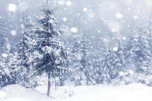 bosque nebuloso en invierno