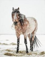 Horse in winter snowfall
