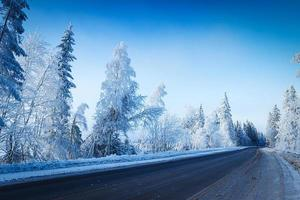 Russian winter forest in snow photo