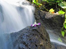 Pedal de flores sobre roca en la cascada de Waikiki foto