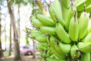 banana cruda foto