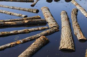 Logs sit in a sawmill pond