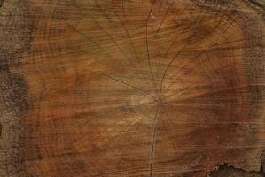 Oak tree cross section