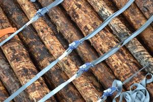 troncos azotados
