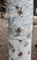 Lamppost riddled with bullets