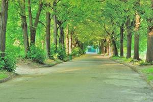 avenida del Parque