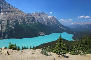 Peyto Lake View