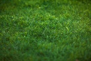 texture of emerald green grass lawn