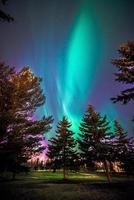 luces de árboles de golf foto