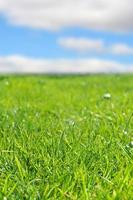 Fresh green grass background with blue sky