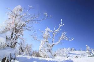 pista de esquí foto