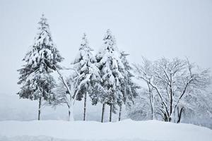 árboles cubiertos de nieve foto