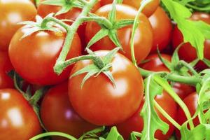 Tomatoes with greens photo