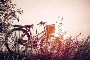 bicicleta vintage con campo de hierba de verano foto