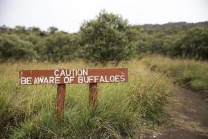 soyez conscient du signe des buffles