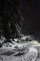 parque central en la nieve, 3 am foto