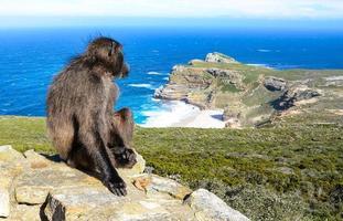 babuíno esperando