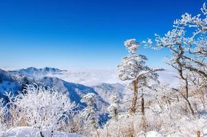 las montañas seoraksan están cubiertas por la niebla de la mañana en invierno, corea.