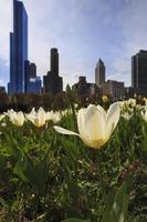 skyline van chicago