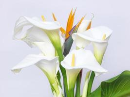 witte calla lelies