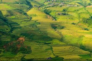 Rice terraces in Vietnam photo