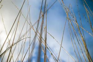 cloudy blue sky background behind grasses photo