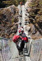 Yaks and people on hanging suspension bridge photo
