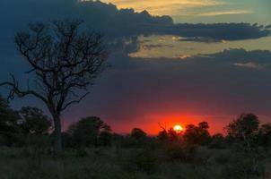 puesta de sol africana foto