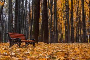 El otoño en el jardín neskuchny.