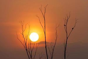 tree and sunset photo