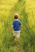 Small boy walking through barley field