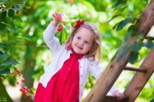 Sweet little girl picking fresh cherry berry in the garden