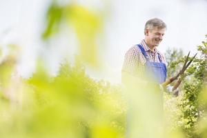 jardinero sonriente podando ramas de árboles en vivero