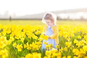 Toddler girl collecting yellow daffodil flowers on sunny summer evening