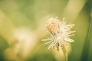 planta de flores