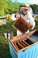 Experienced senior apiarist making inspection in apiary after summer season