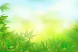 folhas verdes frescas no céu desfocado