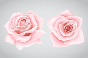 Pink roses flower vector